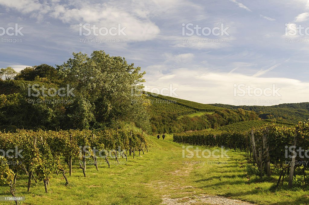 Kaiserstuhl Walking Between Green Vineyards stock photo