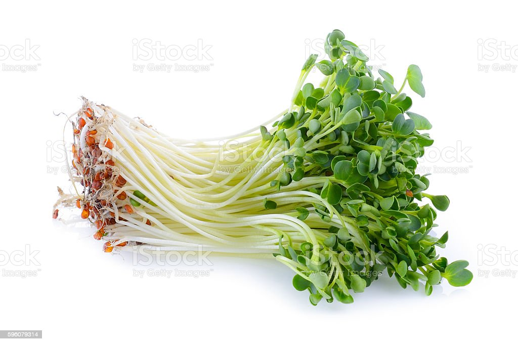 kaiware sprout, japanese vegetable or watercress on white backgr stock photo