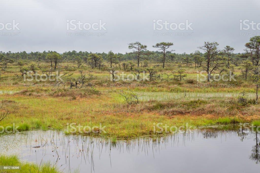 'Kakerdaja' bog in central Estonia stock photo