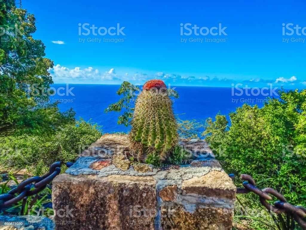Kaktus stock photo