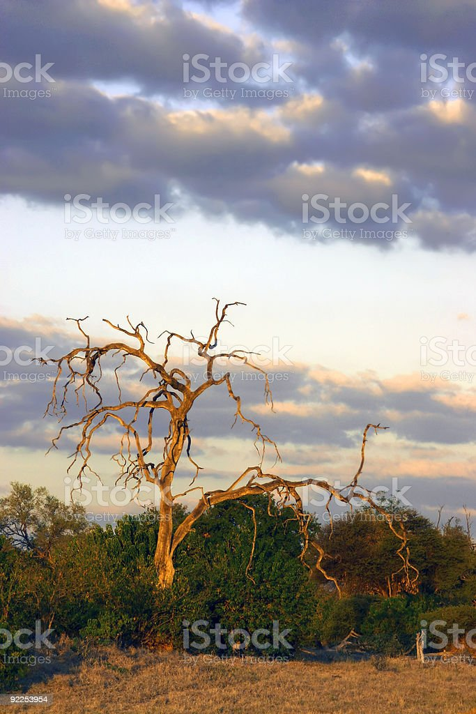 Kalahari at Dusk royalty-free stock photo
