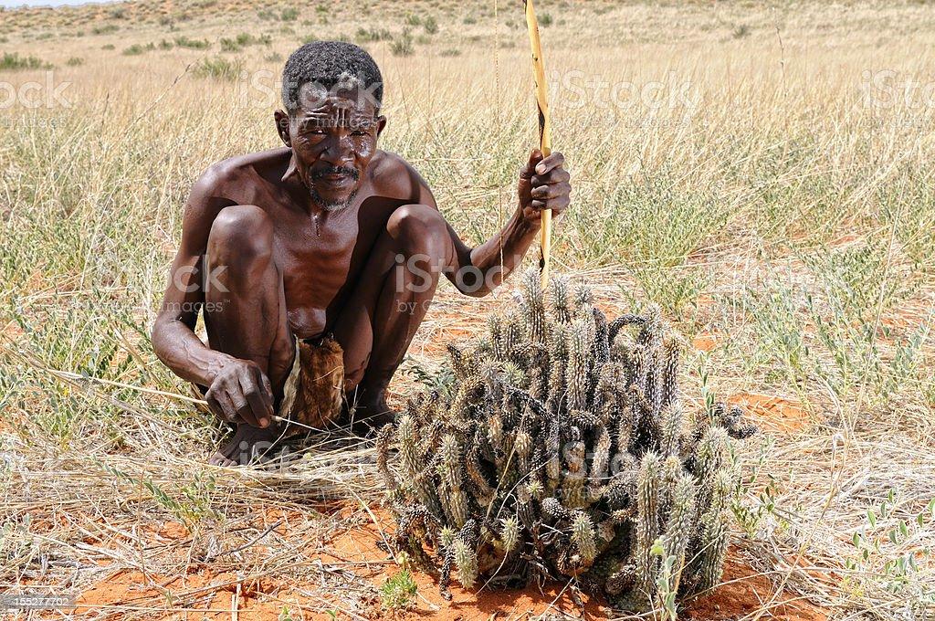 Kalahari bushman with hoodia plant landscape stock photo