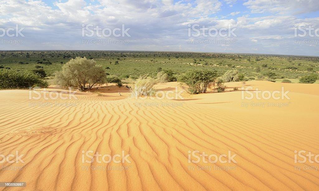 Kalahari desert dune royalty-free stock photo