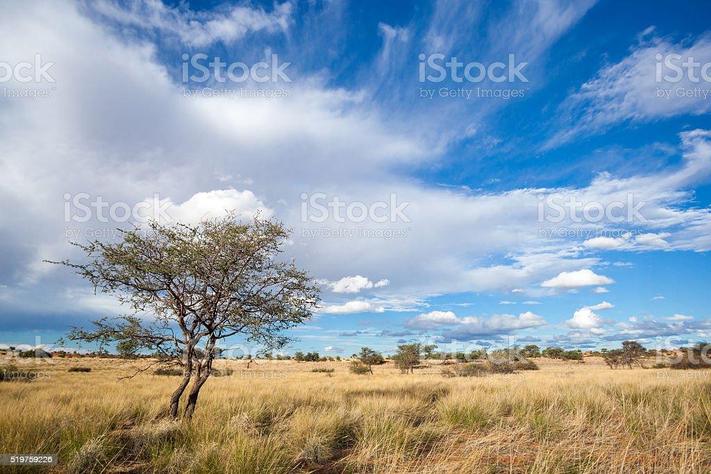 Kalahari Namibia stock photo