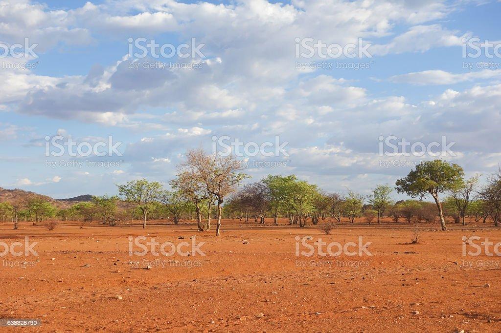 Kalahari stock photo