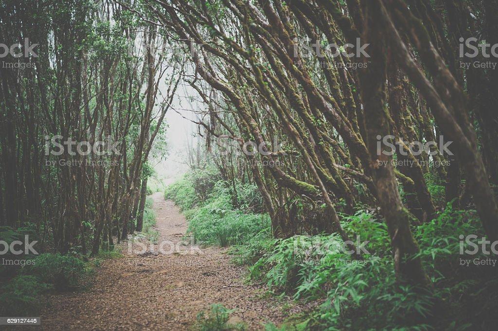 Kalalau Valley Trail Landscape, Napali Coast State Park, Kauai, Hawaii stock photo