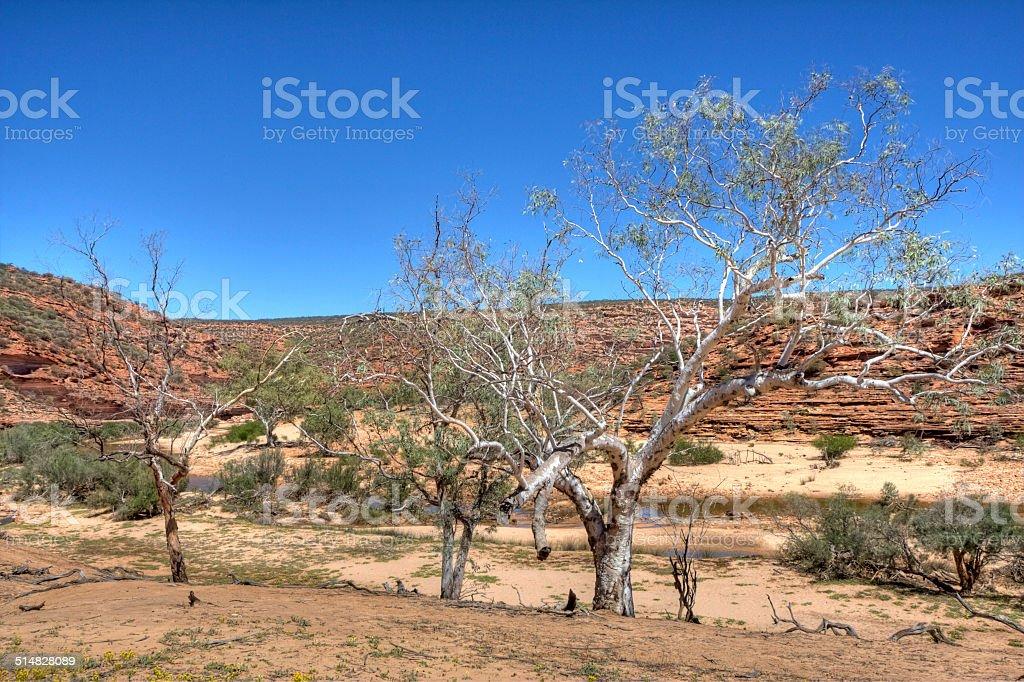 Kalbarri Nature stock photo