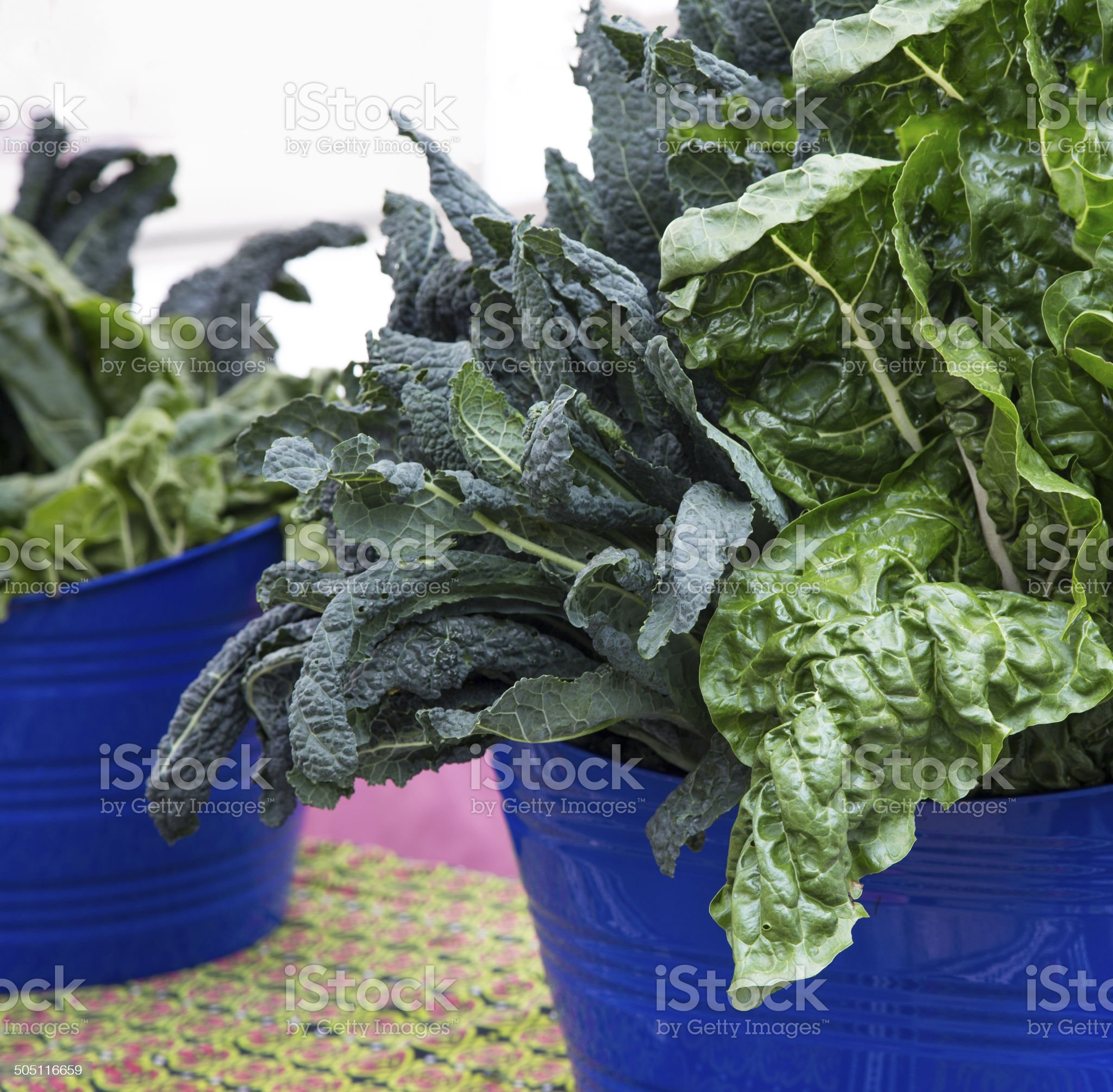 Kale and chard royalty-free stock photo