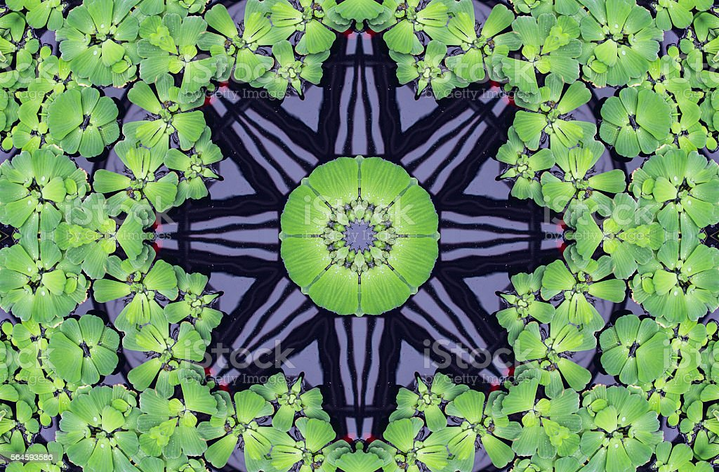 Kaleidoscope pattern with water cabbage stock photo