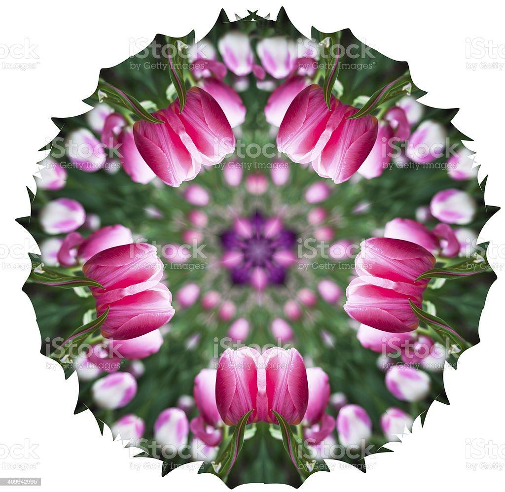 Kaleidoscopic pink tulips stock photo