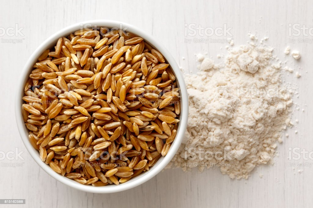 Kamut wheat kernels stock photo
