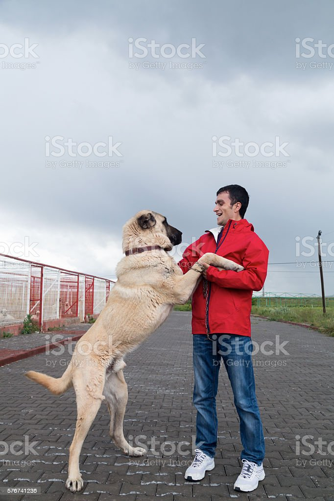 Kangal Dog and man Man stock photo