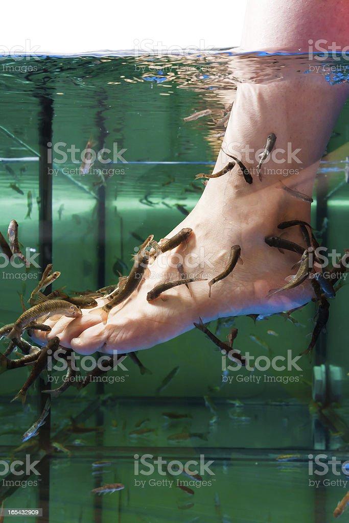 Kangal fish royalty-free stock photo