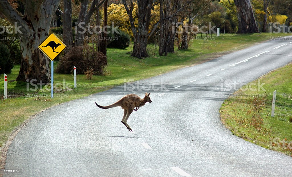 Kangaroo Crossing in front of a sign. stock photo
