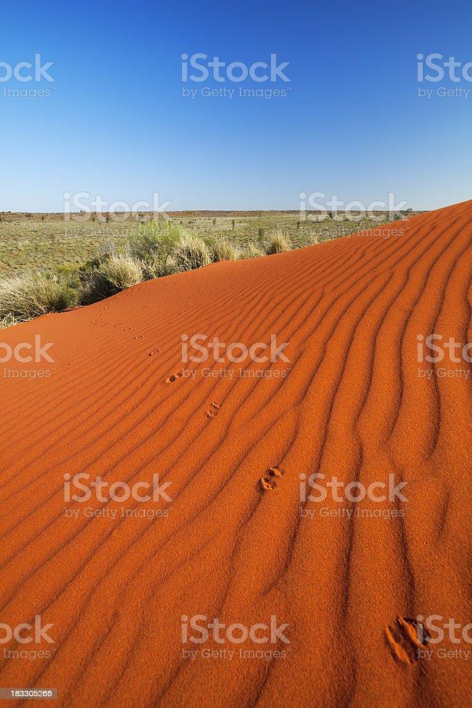 Kangaroo tracks on a red send dune, Northern Territory, Australia stock photo