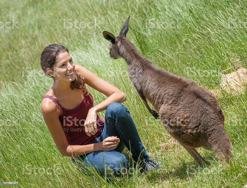 Kangaroo Wildlife Experience, Australia stock photo
