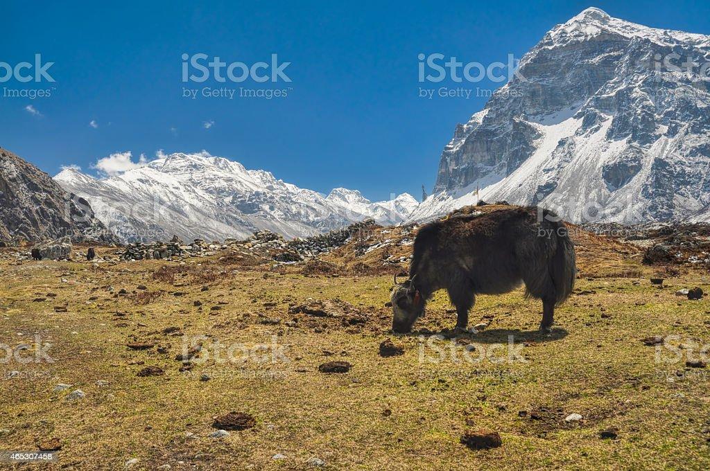 Kangchenjunga stock photo