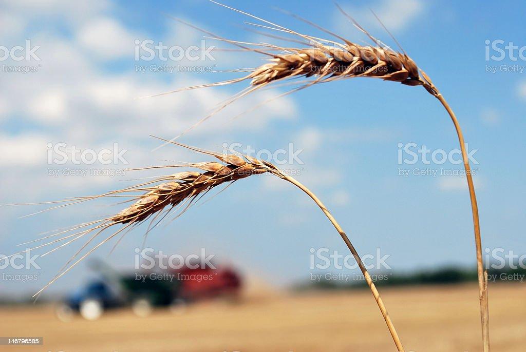 Kansas Harvest at a Glance royalty-free stock photo
