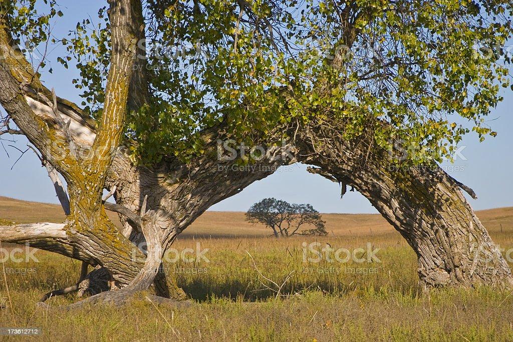 Arche Kansas Prairie peuplier photo libre de droits