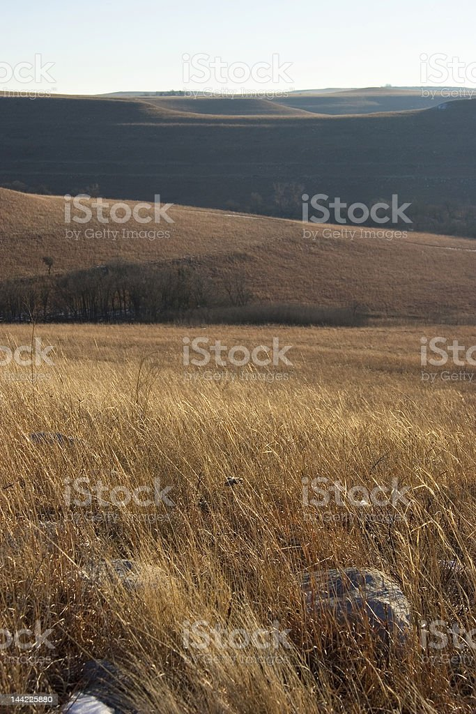 Kansas Prairie Grasses royalty-free stock photo
