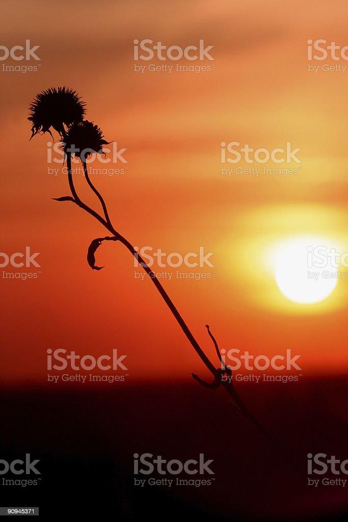 Kansas Sunset royalty-free stock photo