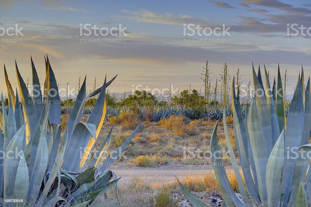 Karoo Landscape - Blouboskuil stock photo