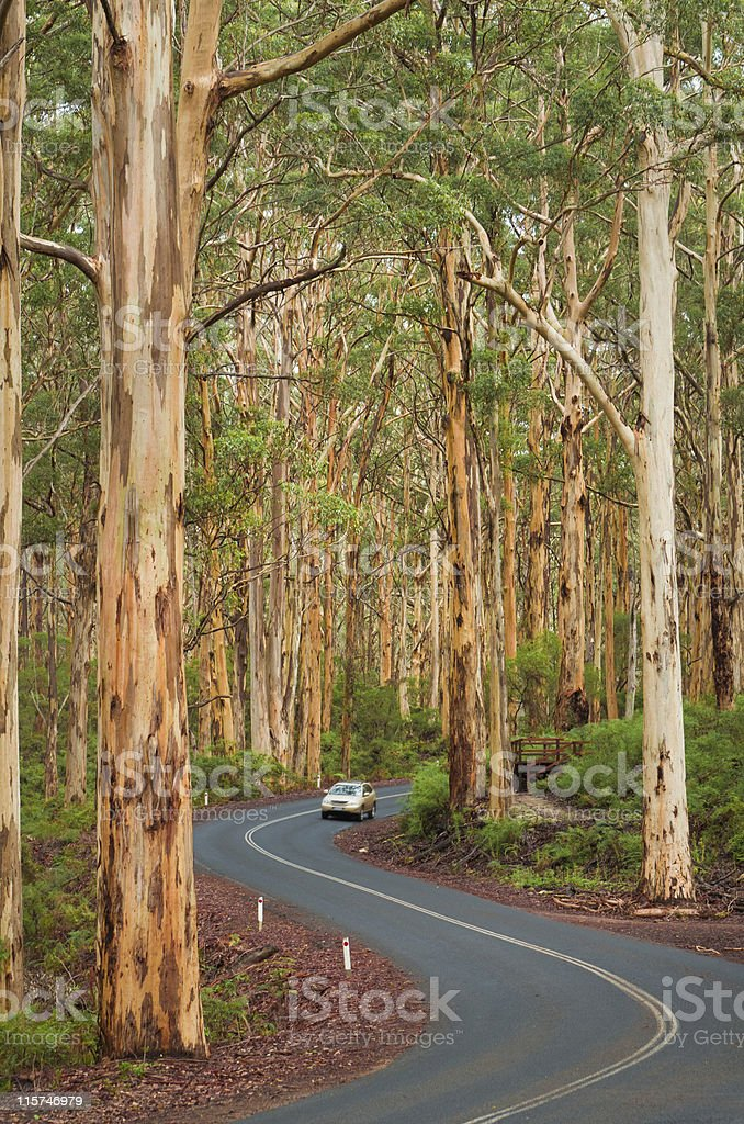 Karri Forest Road and Car stock photo