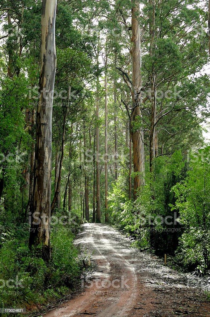 Karri Forest Track stock photo