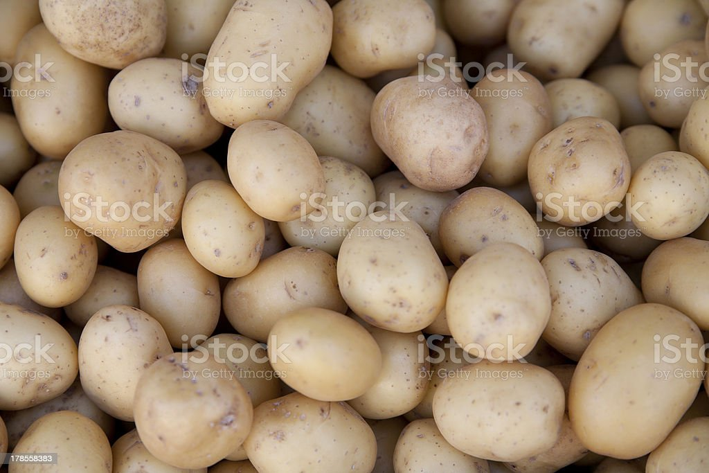 Kartoffeln royalty-free stock photo