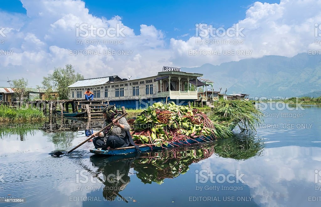 Kashmiri woman carrying fodder plants at Dal Lake, Srinagar stock photo