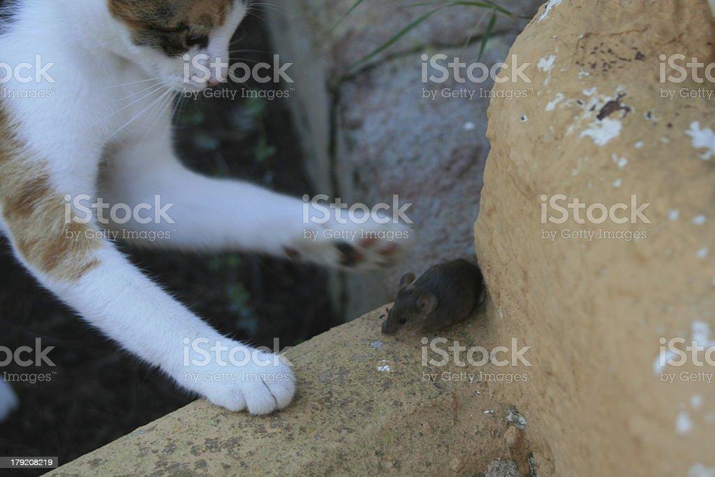 Katz und Maus stock photo