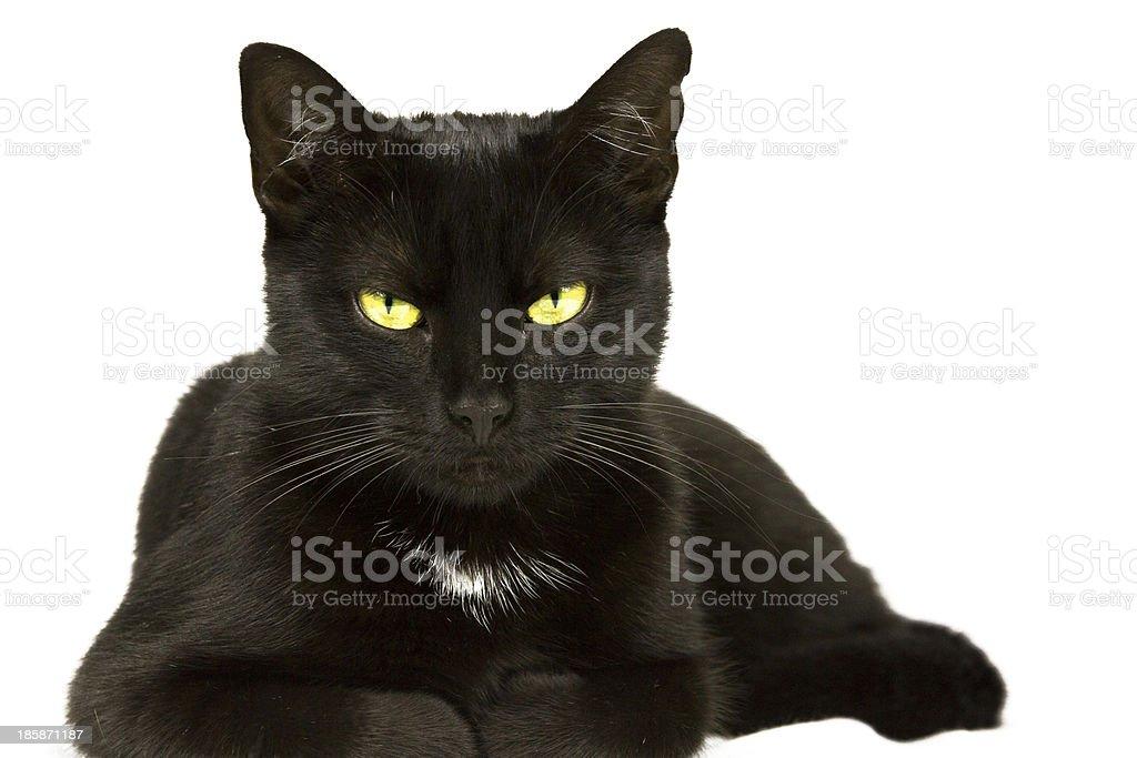 Katze liegt 2 royalty-free stock photo