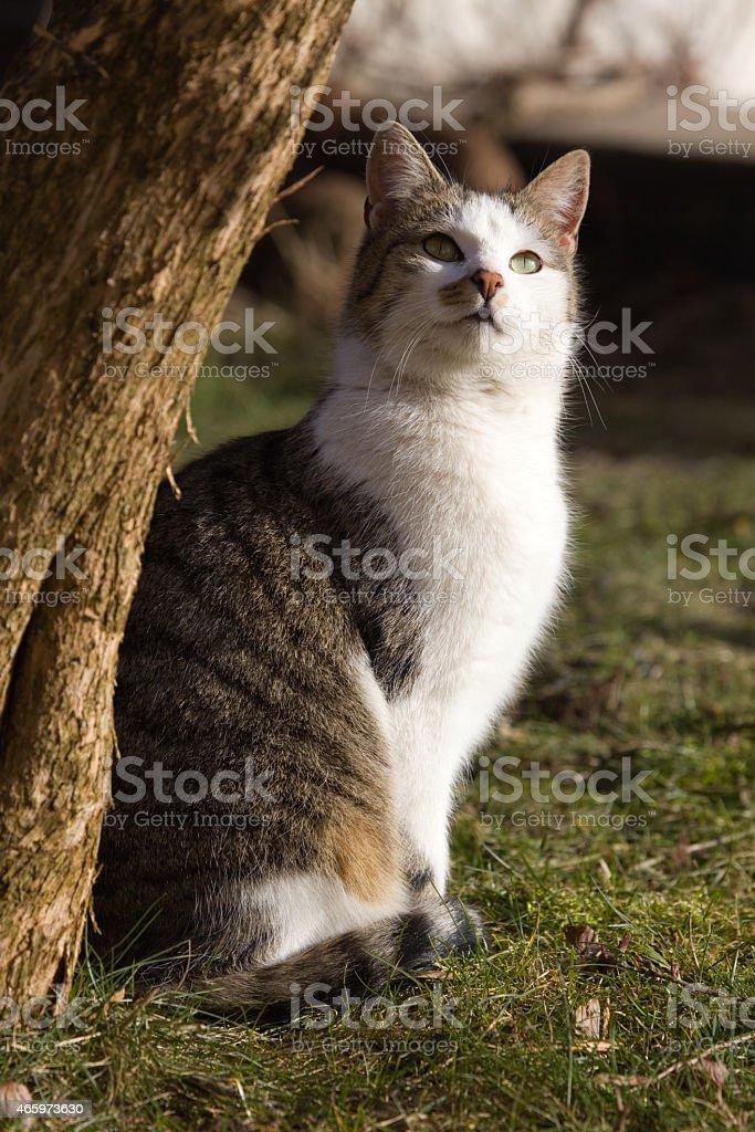 Katze stock photo
