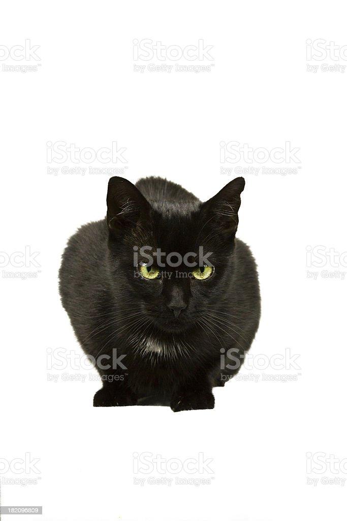 Katze wartet royalty-free stock photo