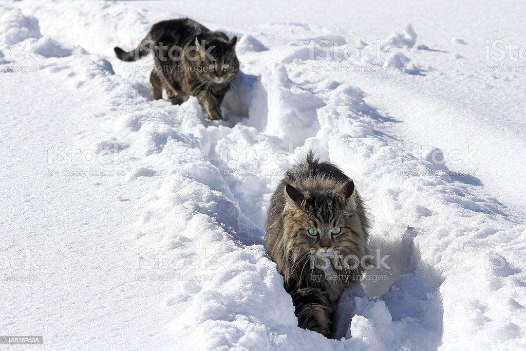 Katzen im Schnee stock photo