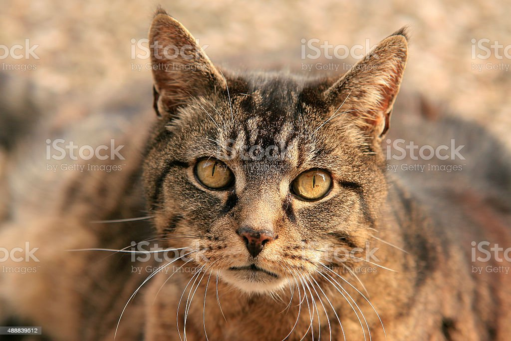 Katzengesicht stock photo