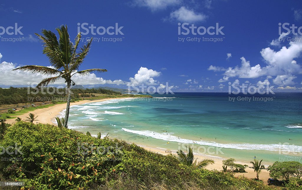Kauai Hawaii Pacific ocean palm tree beach scenic stock photo