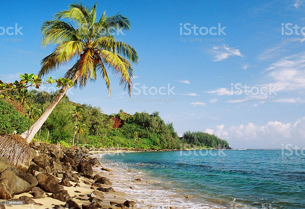 Kauai Hawaii palm tree Pacific ocean coastline royalty-free stock photo