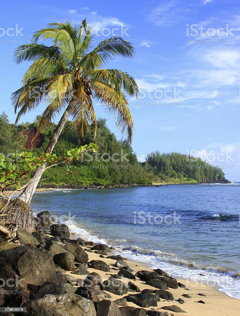 Kauai Hawaii Palm tree  tropical style scenic stock photo