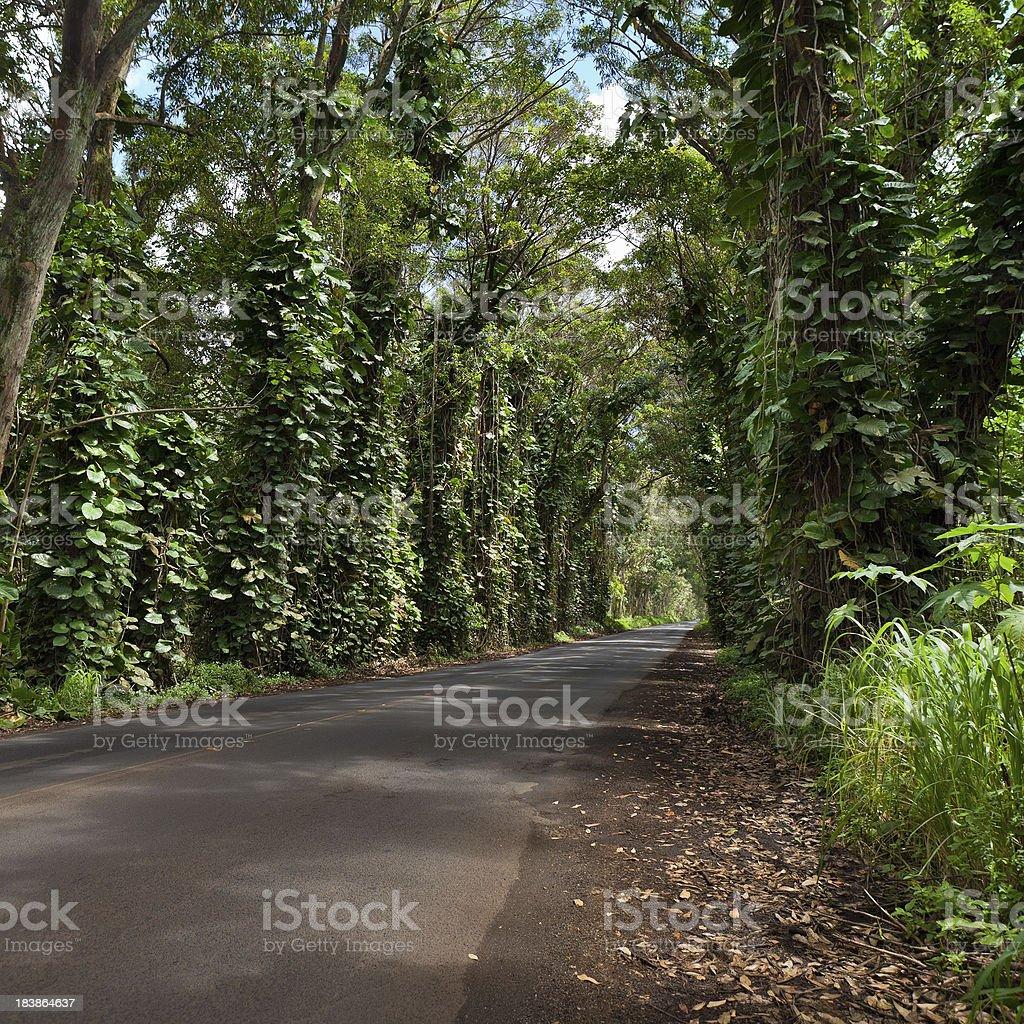 Kauai Tree Tunnel royalty-free stock photo
