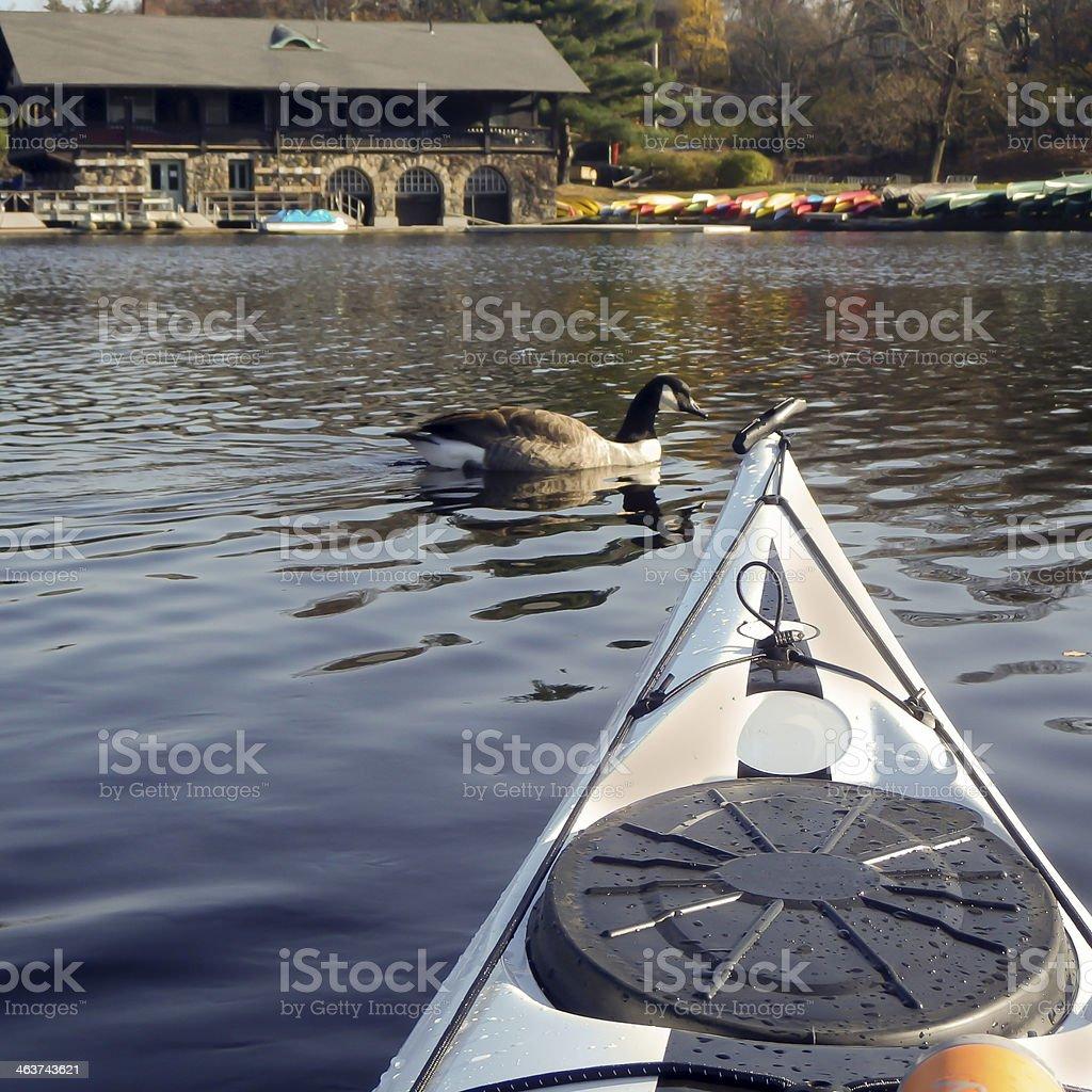 kayak surfer meeting a duck stock photo