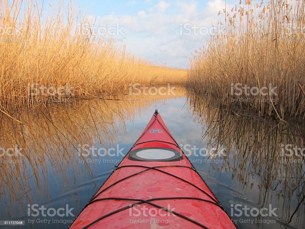 Kayaking on calm lake with dry bulrush stock photo