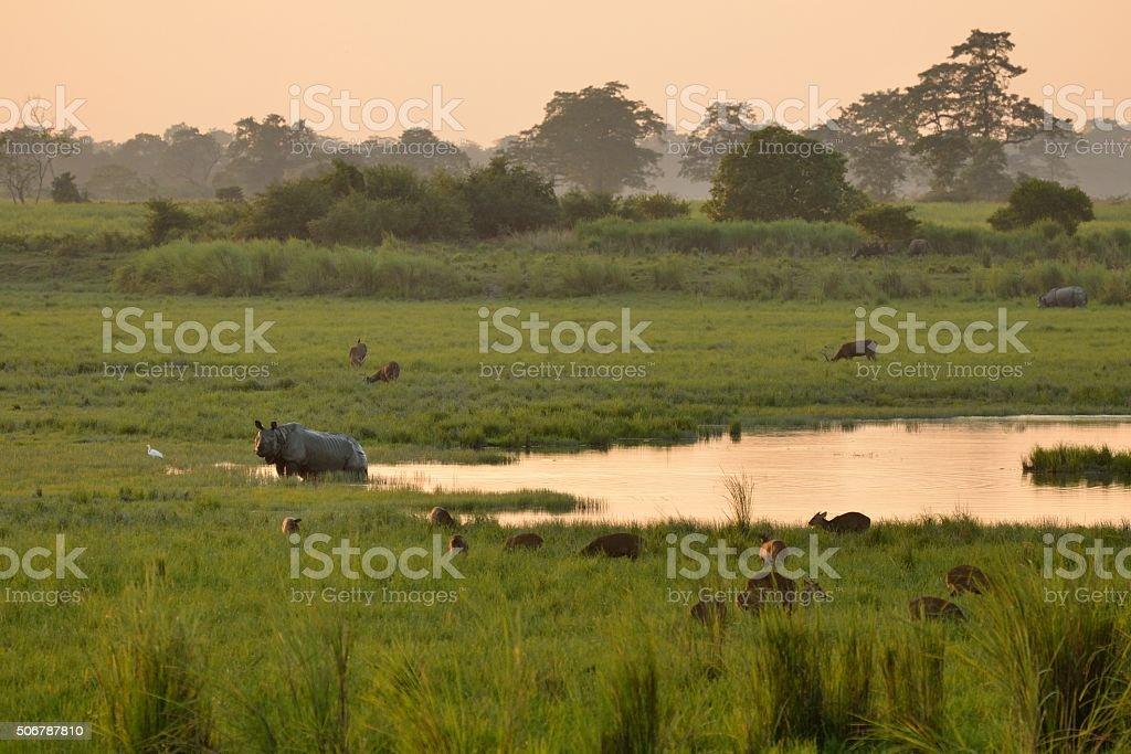 Kaziranga National Park stock photo