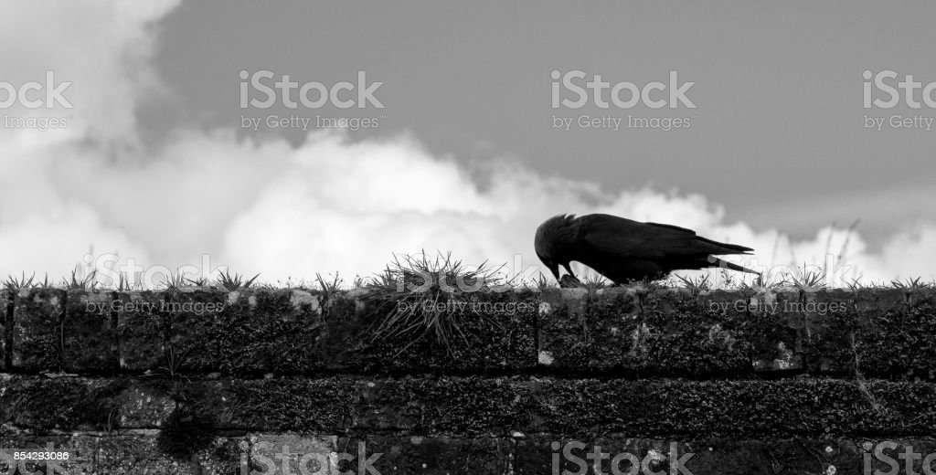 Keep away from my lunch on iStock