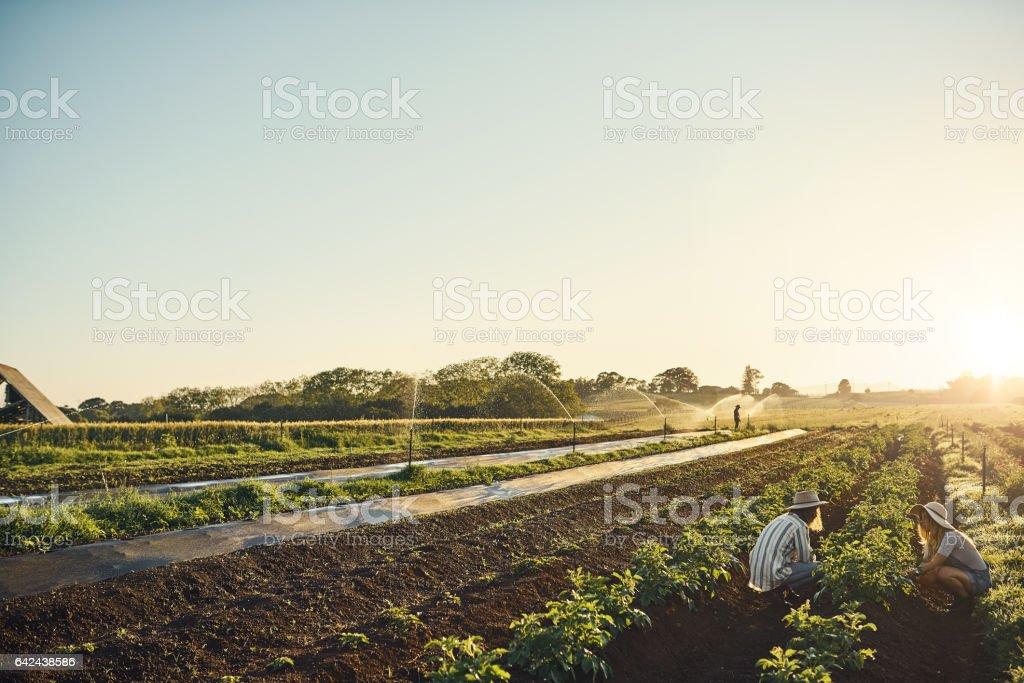 Keep calm and farm on stock photo