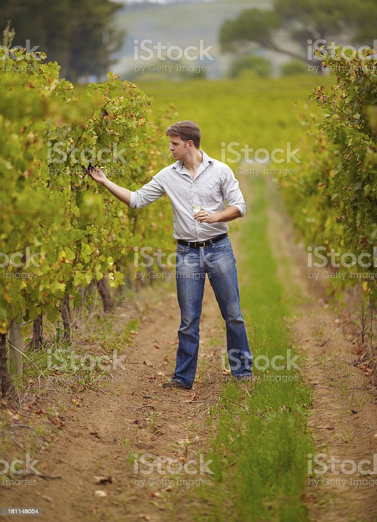Keeping an eye on his grapes royalty-free stock photo