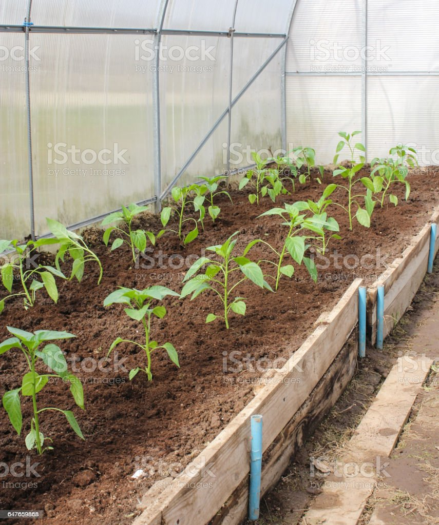 Keeping plants with bedding. stock photo
