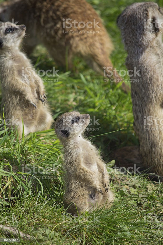 Keeping watch royalty-free stock photo