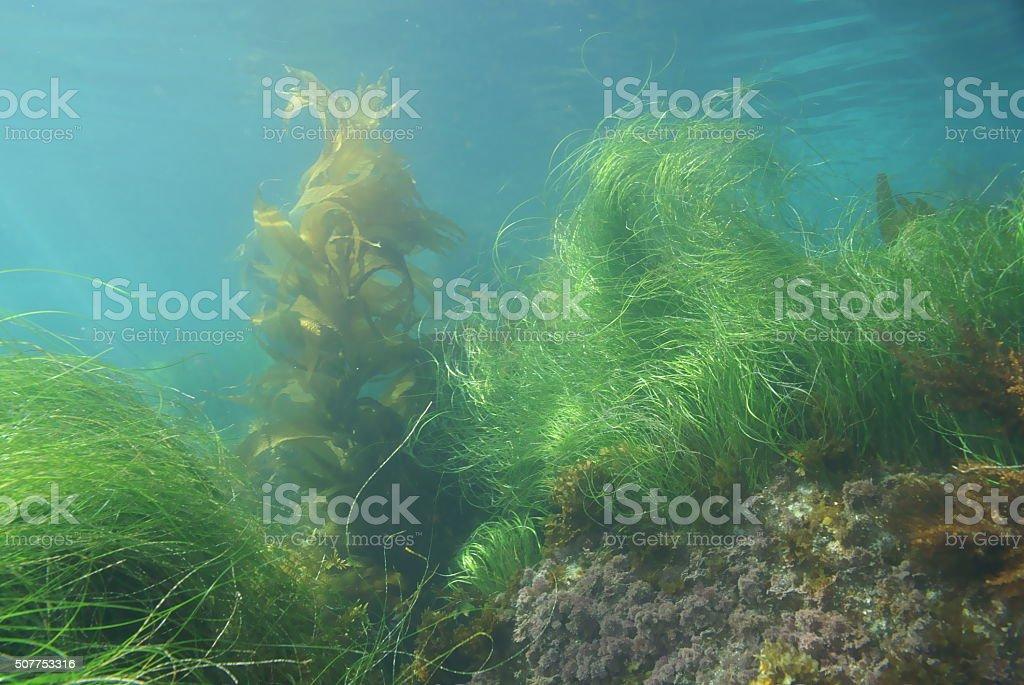 Kelp and sea grass at Laguna Beach stock photo