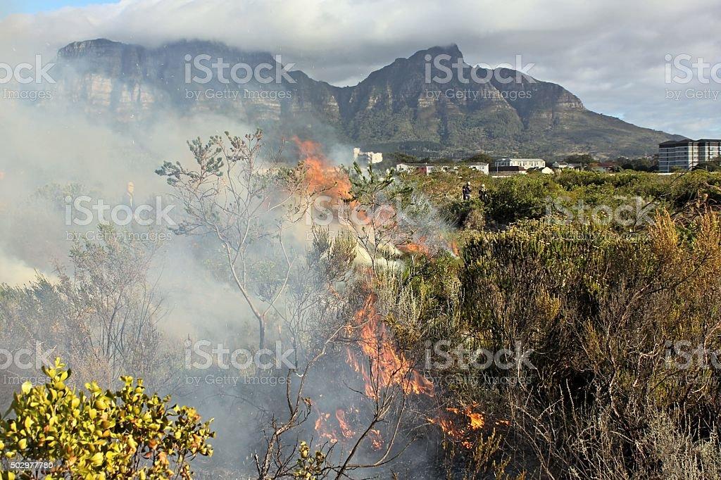 Kenilworth vegetation fire (in Fynbos) stock photo